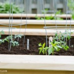 How to start a vegetable garden, 10 easy tips