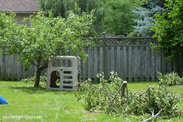 our pear tree fell over