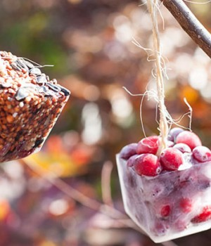 DIY Ice cube birdfeeders