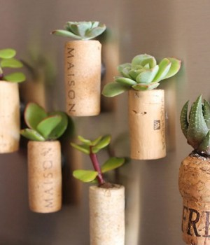 DIY cork planters as fridge magnets