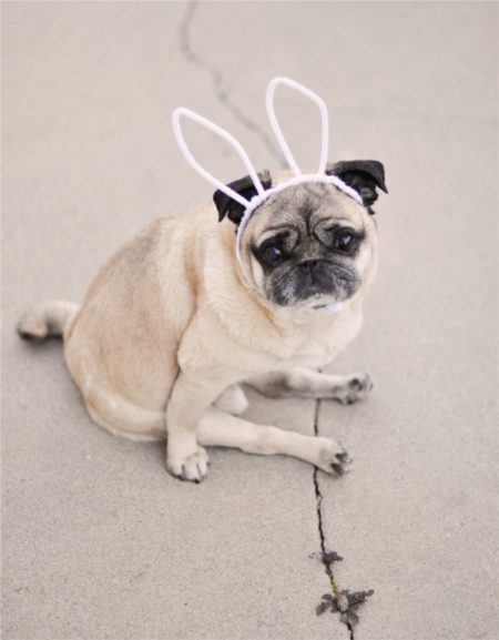 Make a pair of bunny ears for the dog