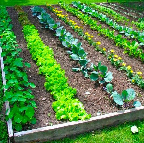 17 clever vegetable garden hacks for Vegetable patch ideas