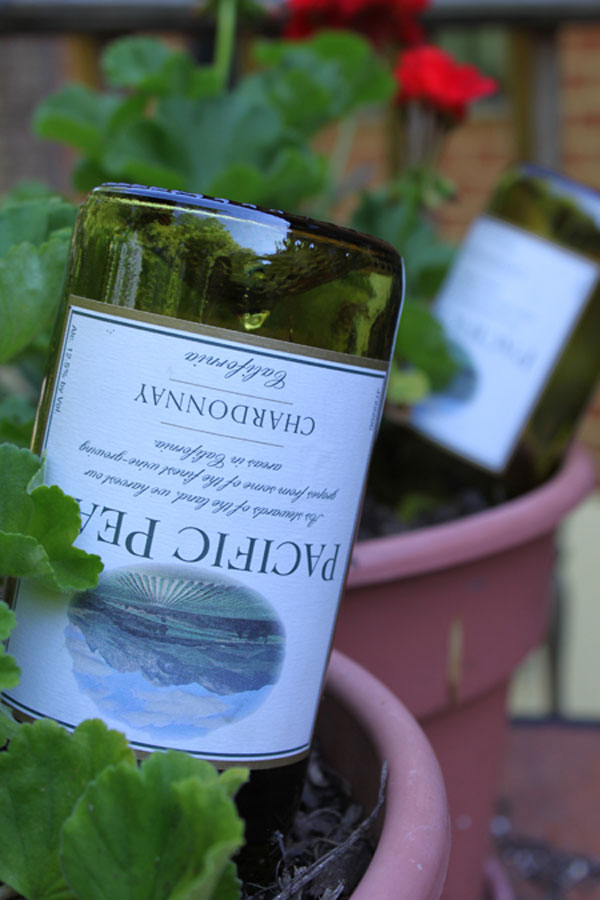 17 clever vegetable garden hacks for How to use wine bottles in the garden