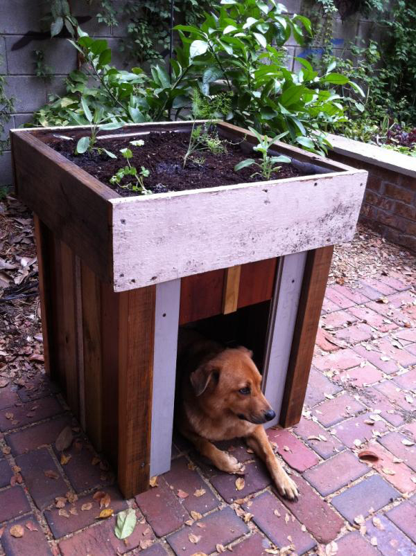 15 Unusual Vegetable Garden Ideas - Dog house with a green roof