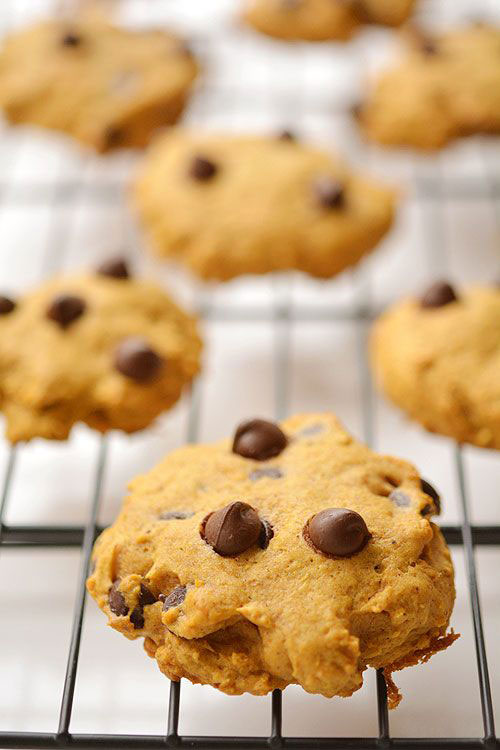 50+ Best Pumpkin Recipes - Pumpkin Chocolate Chip Cookies