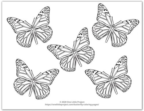 Monarch Butterfly Coloring Page 4