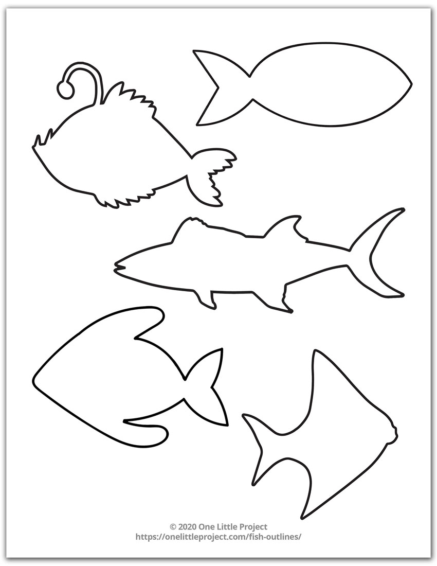 Many Fish Shapes